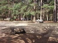 Bungleboori Camping Area 2
